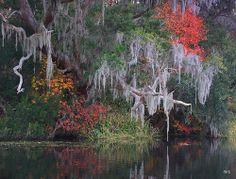 Late autumn colors outside of Charleston, South Carolina  #America #photography #Southern