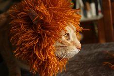 Ravelry: Cat's Mane pattern by Mer Almagro