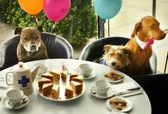 Dogs Attend Britain's Biggest Tea Party -- Blue Cross Animal Charity