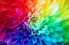 What if flowers were rainbow color?