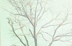 mints, mint green, mint blue, color, mint tree, inspir, branch, artwork, photographi