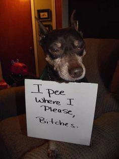 Dog Shame | I pee where I please, bitches…
