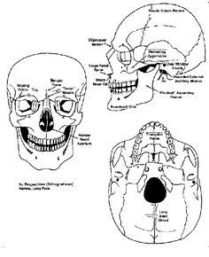 Discerning race from the skull - European ancestry (Forensic Anthropology)