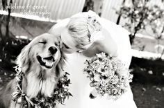 Pets In Wedding