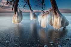 Landscape photographer Timothy Corbin recently captured some stunning photos of ice-laden tress on the shore of Lake Ontario.