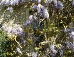 Great Chalfield Mano