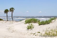 Hunting Island near Beaufort, SC...one of my favorite places on earth...where I met the man of my dreams!~~CTanner
