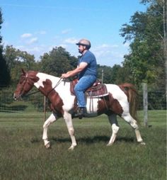 Drastically reduced! Two spotted, gaited trail/road horses - $800 (Lawrenceburg, KY)