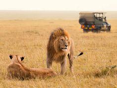 Go experience the wilds of Kenya! wild, experi, kenya, travel, istanbul, citi