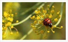 Seeds of Change - Organic Seeds - Home Garden, Vegetable Seeds at SeedsofChange.com