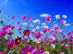 wonderful season, spring