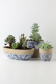 new pots for the porch.