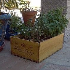 Successful Container Gardening in the Desert Southwest (or Anywhere!)