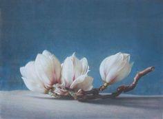 Prachtige magnolia van Fulvio Rinaldi