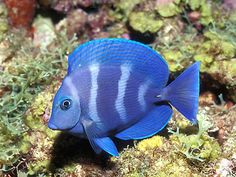Pretty fish.