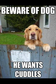 Like most Goldens!