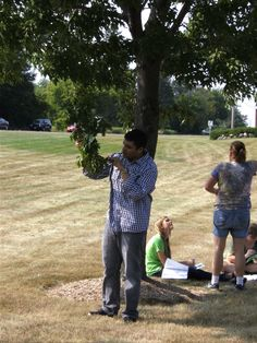 Tree Lab - Bilal examines a maple leaf.