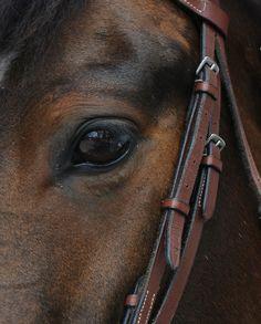 beauti hors, hors eye, beauti anim, brown passion, horses