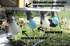 DIY Grow Lamps for Spring Seedlings. Here's a frugal answer to those expensive, fancy grow lights. You can do this! #gardening #seeds