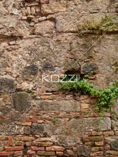 wall plant growing - Plants growing out of a worn brick wall