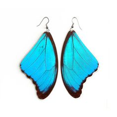 "Real Butterfly wing Earrings ""Morpho Didius"" Free Shipping Worldwide ($12) ❤ liked on Polyvore"