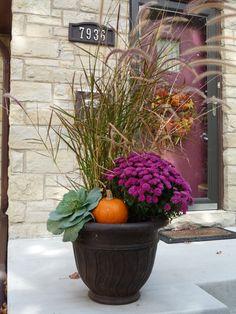 planter grass, fall planters, purple grass, purpl fountain, mumspumpkin