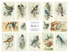 BIRDS, digital collage sheet, vintage images, art, cards nature illustration garden spring Victorian ephemera DOWNLOAD. $3,95, via Etsy.