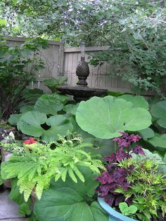 Small corner shade garden