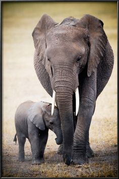 Mommy and baby elephants