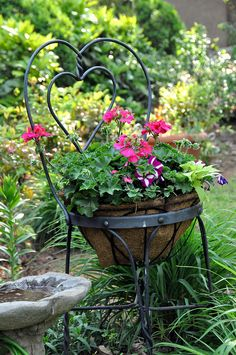 Chair planter - Hot pink geraniums, purple and white striped petunias and chartreuse sweet potato vine.