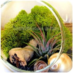 Hanging AIR PLANT TERRARIUM Kit  Glass Orb Globe  by AGiftofNature, $24.00