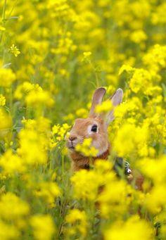 yellow flowers, christmas bells, peter rabbit, bunni, flower fields, baby animals, animal babies, spring, easter bunny