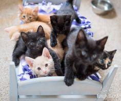 It's a kitten slumber party !!!