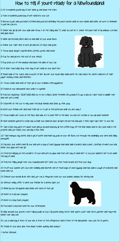 How to tell if you're ready for a Newfoundland:This is SO true!!!!