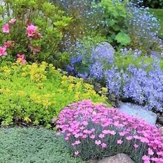 Stop weeds with ground-cover plants :: Ground-cover plants