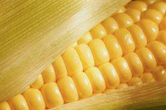 Moosewood Cookbook recipe for Corn Chowder