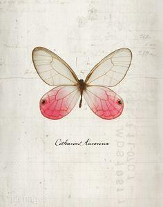 maya angelou, fashion shoes, butterflies, girl fashion, rosey posey, art, papillon, girls shoes, illustr