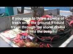 What will you do to stop ocean pollution?