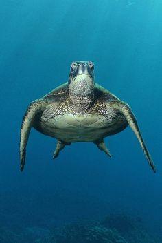 Sea Turtle...<3