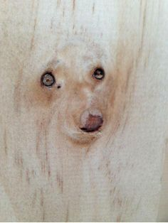 The knots in the wood look like a dog