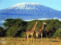 Mount Kilimanjaro - Bing Images