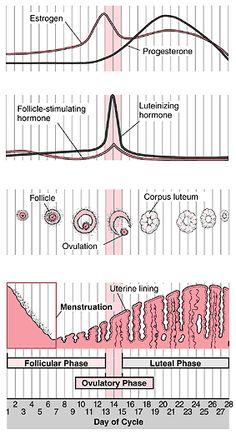 menstruation før tid netdating guide