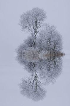 winter trees, art, snow, winter wonderland, white, natur, beauti, photographi, winter reflect