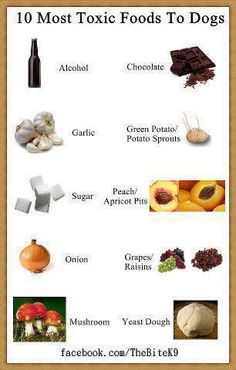 10 Most Toxic Foods To Dogs anim, foods, dogs, toxic food, stuff, pet, doggi, puppi, thing