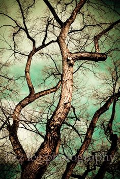 Reaching Up by lizzleephotography on Etsy