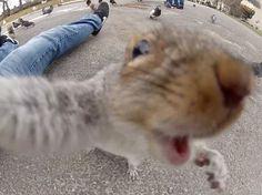 Squirrel attacks...