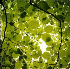 tree leaves, trees, quot tree