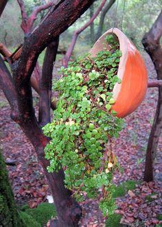 hang a plant