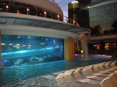 Golden Nugget shark tank pool slide.