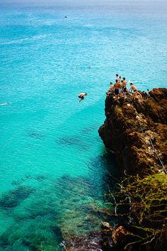 Black Rock Diving, Maui, Hawaii - I have done this at this exact location! So fun! A sea turtle swam right up to us too! And the fish and underwater is beautiful. We even out on a boat to snorkel and it wasn't as beautiful as this. Plus it's right next to your hotels.